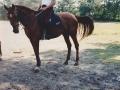 1996_ponykamp_Budel_0023