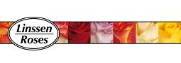 Linssen Roses